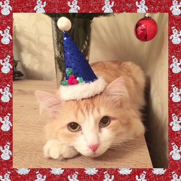кот, новый год