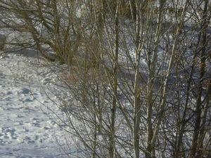 Мороз и солнце. Небольшая фотосессия. Ярмарка Мастеров - ручная работа, handmade.