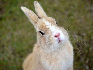 Образ кролика в искусстве и рукоделии. Ярмарка Мастеров - ручная работа, handmade.