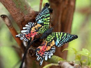 Тест: Насколько хорошо вы знаете названия бабочек?. Ярмарка Мастеров - ручная работа, handmade.