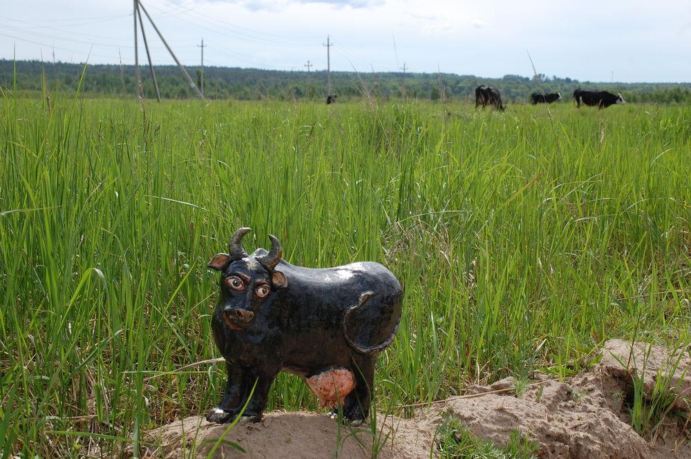 новая работа, корова