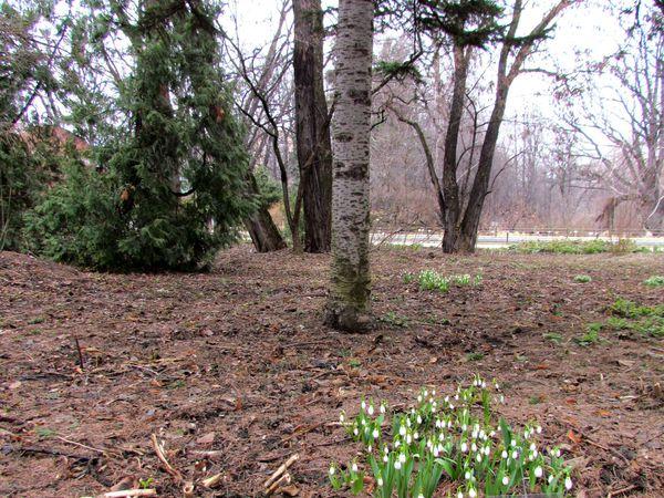 Торжество Весны | Ярмарка Мастеров - ручная работа, handmade
