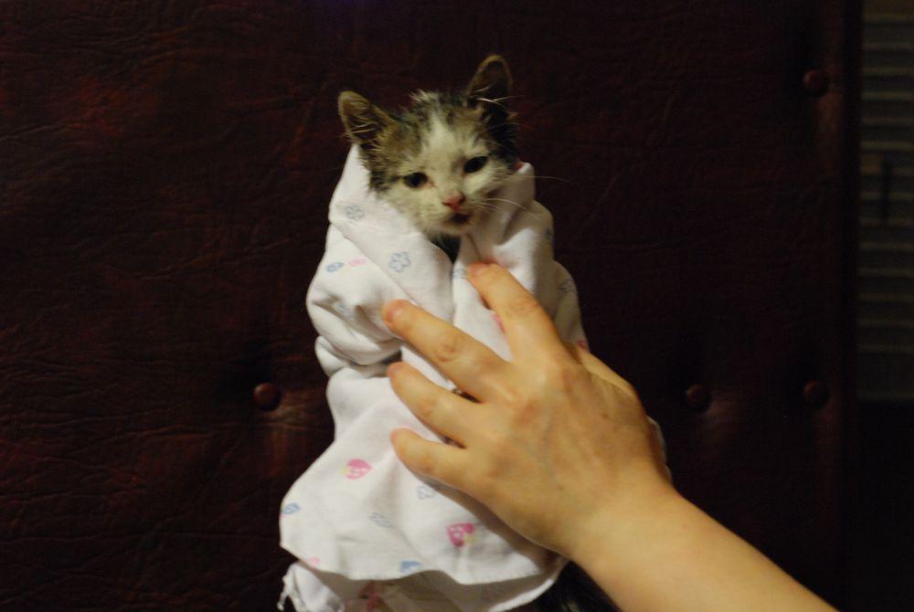 кот в доме, домашний питомец
