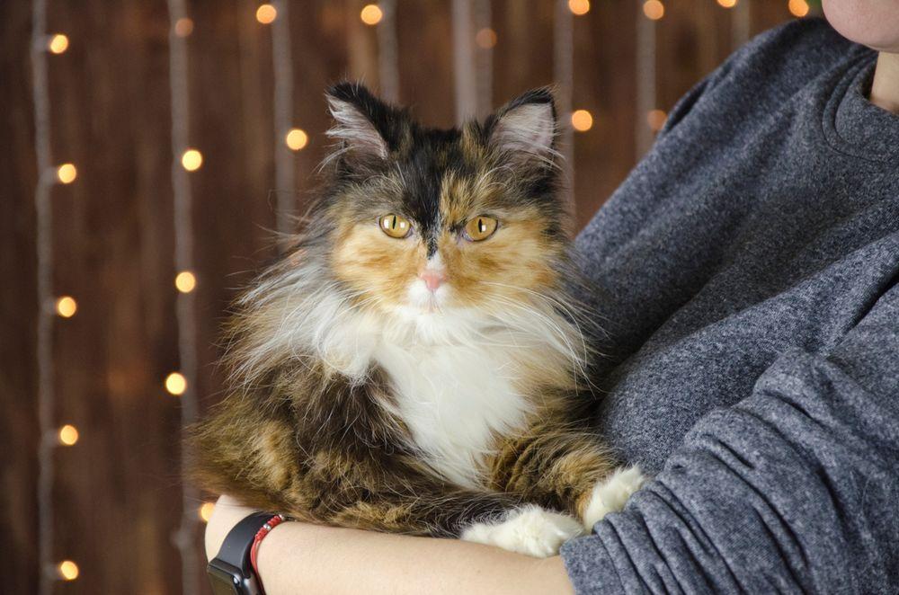 помощь кошке, животным нужна помощь
