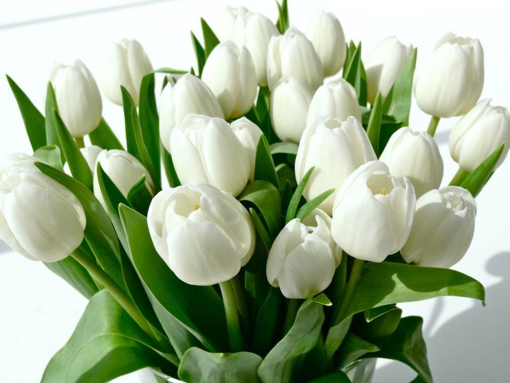 Открытки с днем рождения тюльпаны белые