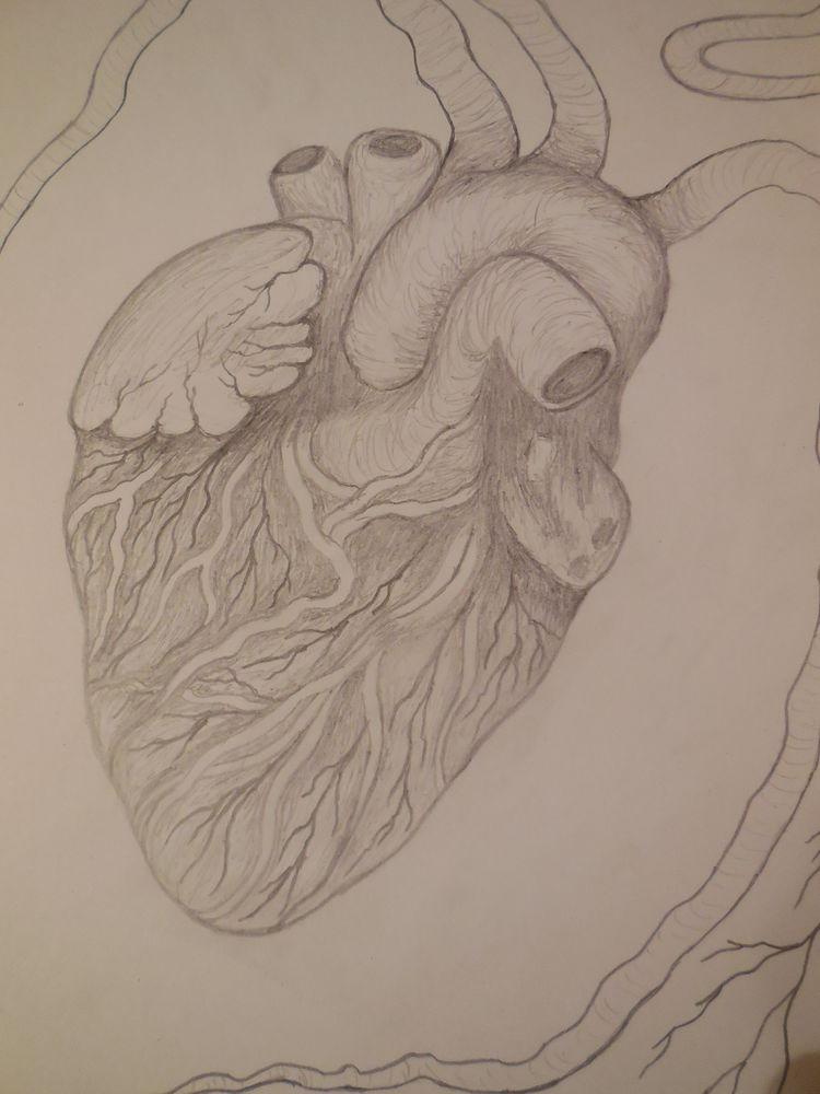 наброски, сердце