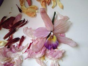 Орхидея. Ярмарка Мастеров - ручная работа, handmade.