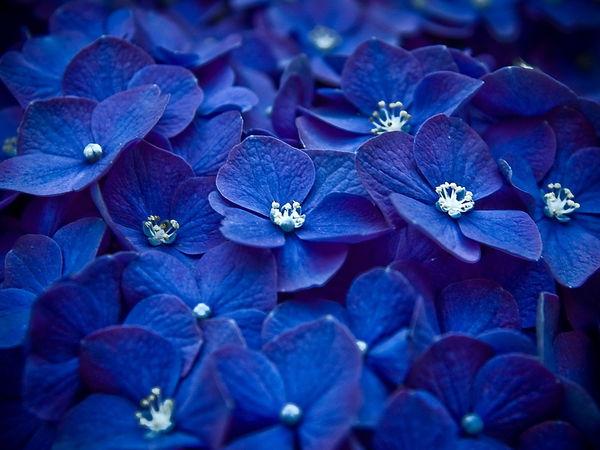 Сверхъестественный синий — цвет умиротворения и вечности в творчестве и природе