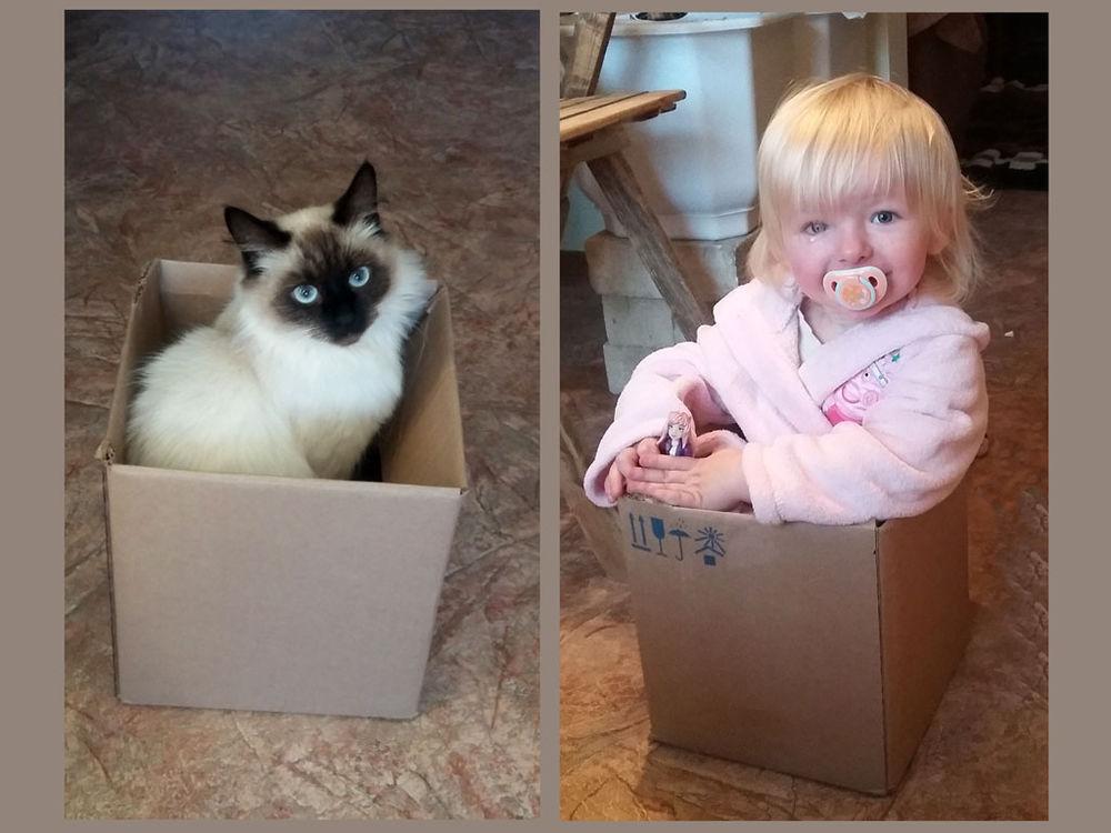кошка, дети