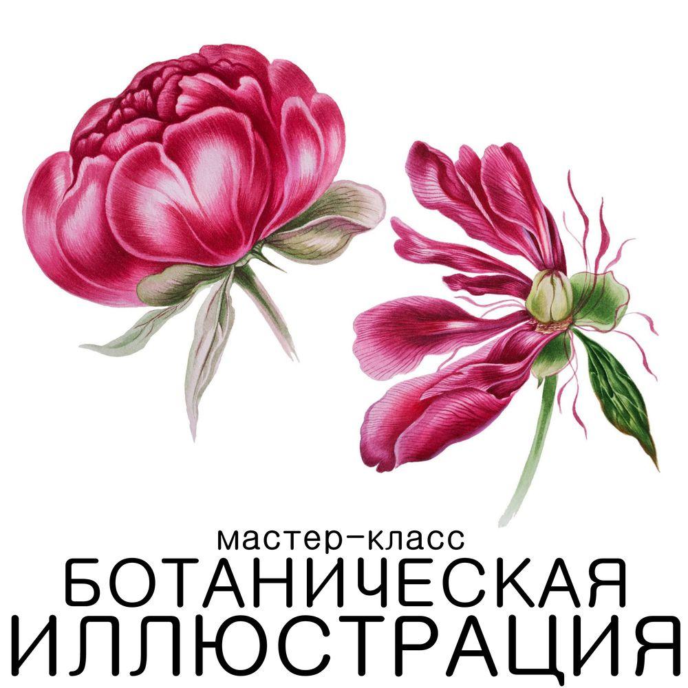 Ботаническая иллюстрация.