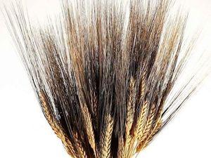Новые виды пшеницы - сухоцвет!. Ярмарка Мастеров - ручная работа, handmade.