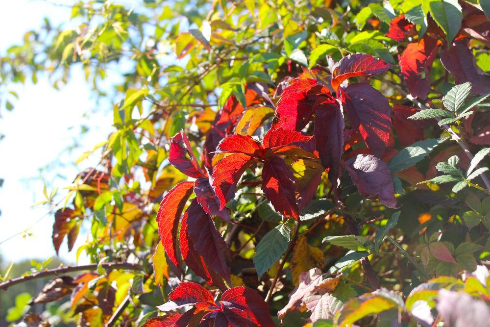 яркая ростовская Осень, фото № 13