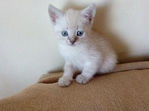 Отдам в дар игривых котят. Ставрополь   Ярмарка Мастеров - ручная работа, handmade