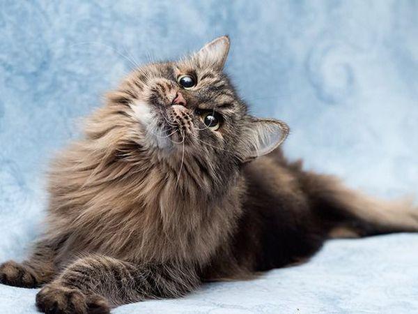 Каждой кошке нужен Дом! | Ярмарка Мастеров - ручная работа, handmade