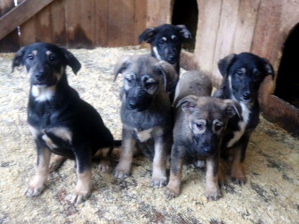 Сбор лотов в помощь малышам щеночкам!   Ярмарка Мастеров - ручная работа, handmade