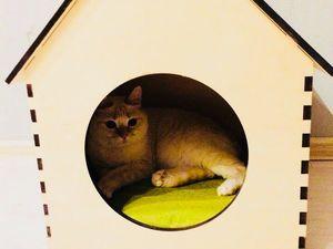 Как приучить кошку к лежаку?. Ярмарка Мастеров - ручная работа, handmade.