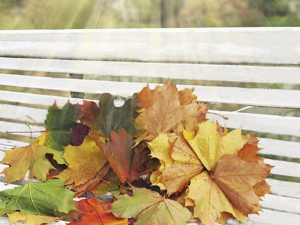 Осенние листья  фотокартина | Ярмарка Мастеров - ручная работа, handmade