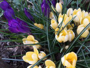 Весна! Весна! Весне дорогу! | Ярмарка Мастеров - ручная работа, handmade