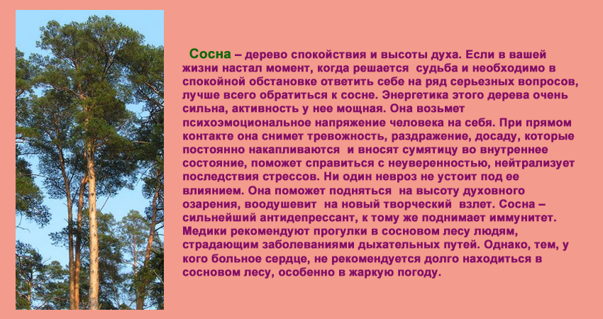 деревья, интересные факты