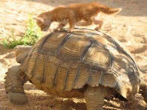 Покатай меня , большая черепаха.... | Ярмарка Мастеров - ручная работа, handmade