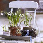 spring-flowers-new-ideas-snowdrops-and-crocus6.jpg