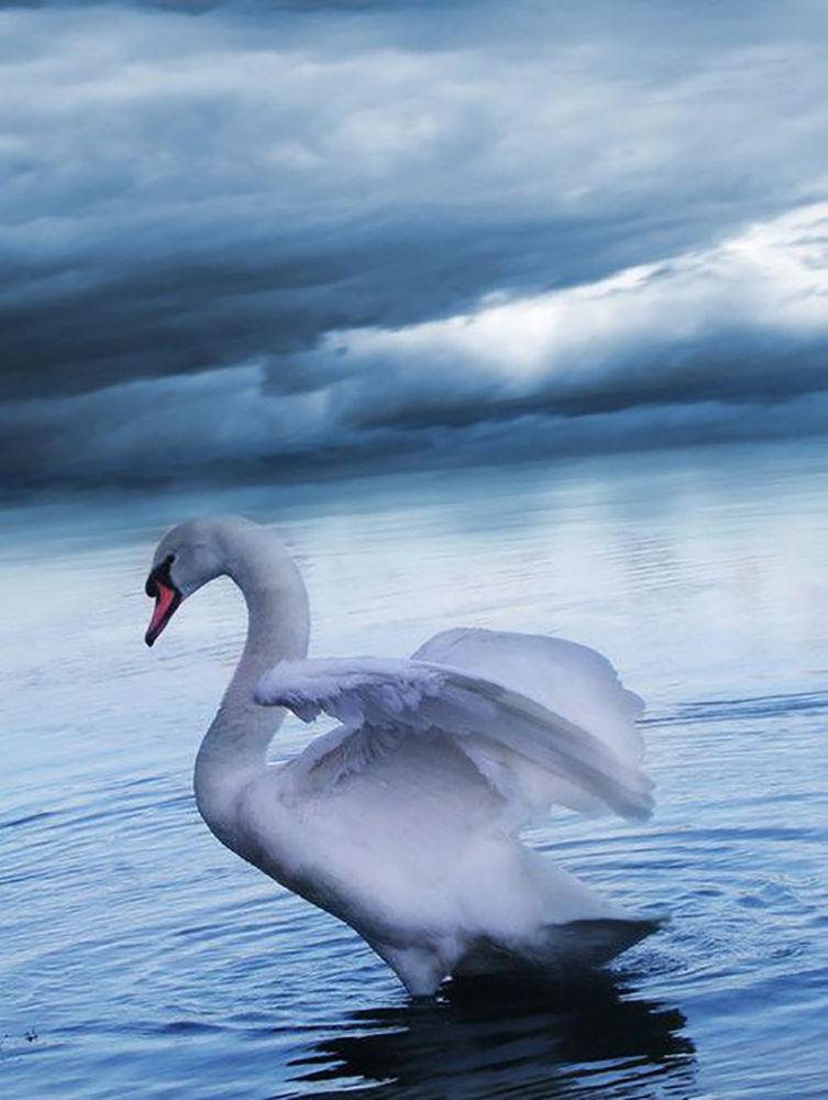 дева-лебедь, легенда