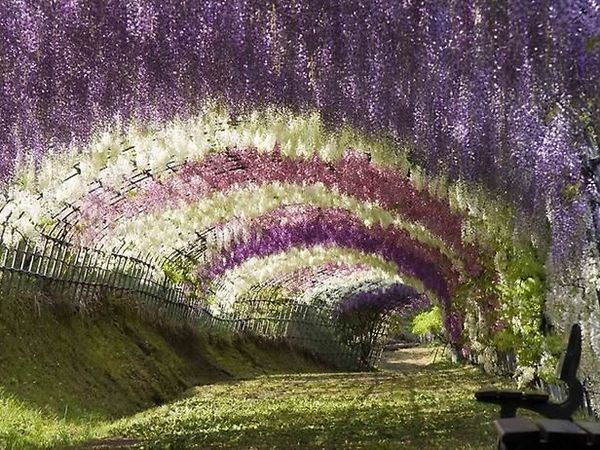 Сказочные сады мира | Ярмарка Мастеров - ручная работа, handmade