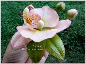 Брошь — заколка Орхидея фаленопсис кремовая. Холодный фарфор. Ярмарка Мастеров - ручная работа, handmade.