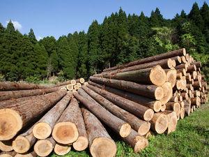 Ценные породы древесины. Ярмарка Мастеров - ручная работа, handmade.