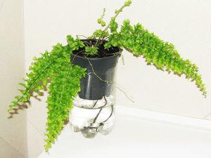 Вторая жизнь пластиковых бутылок. Фитильный полив растений. Ярмарка Мастеров - ручная работа, handmade.