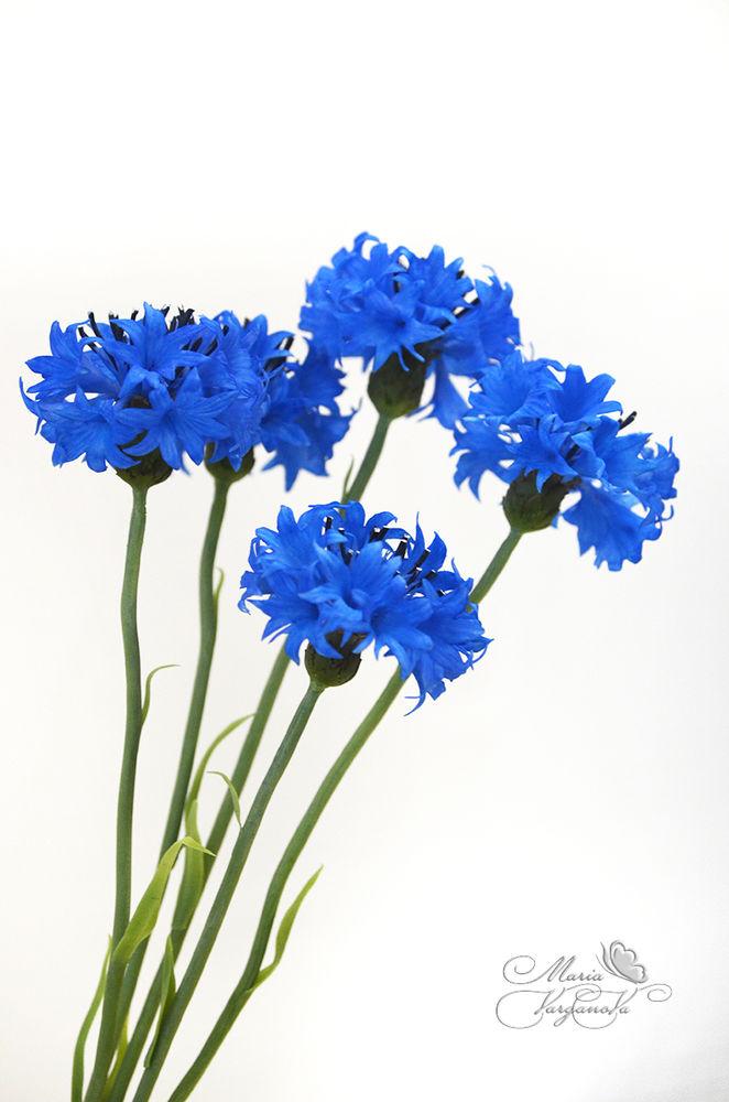 лепка цветов, василёк, реалистичные цветы, ботаническая скульптура