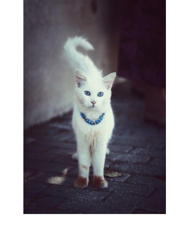 благотворительность, благотворительная акция, кошка, кошка ищет дом