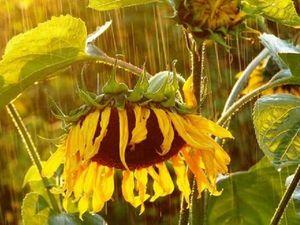 Дождь - это не всегда серо и уныло! | Ярмарка Мастеров - ручная работа, handmade