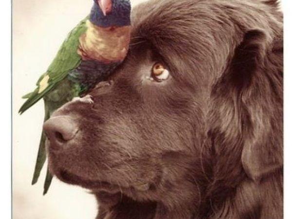 Пес и Птичка | Ярмарка Мастеров - ручная работа, handmade