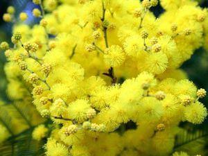C праздником весны, цветов и красоты!!! | Ярмарка Мастеров - ручная работа, handmade