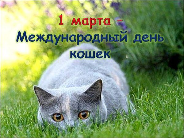 1 марта-Всемирный день кошек | Ярмарка Мастеров - ручная работа, handmade