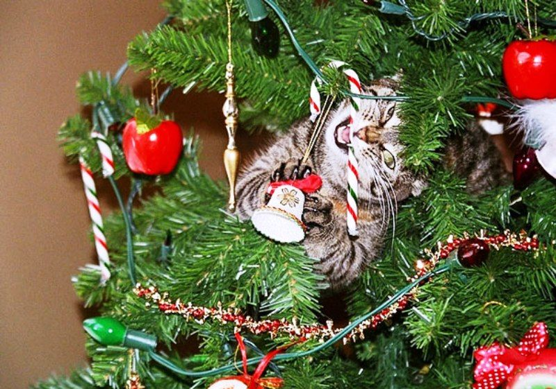 Christmas Cats! And a Little About the Safety of Pets During the Holidays, фото № 16