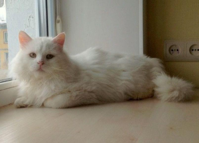 помощь животным, благотворительность, кот, белый кот, в добрые руки, дом для кошки