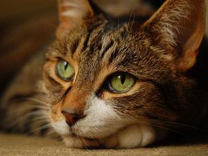 Для тех, кто любит кошек ;-) | Ярмарка Мастеров - ручная работа, handmade
