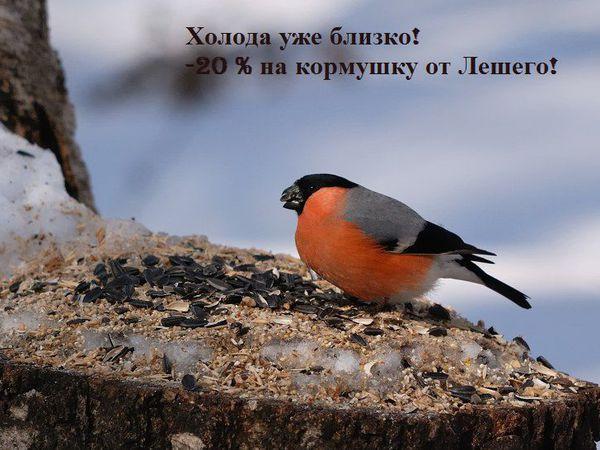-20% на кормушку от Лешего   Ярмарка Мастеров - ручная работа, handmade