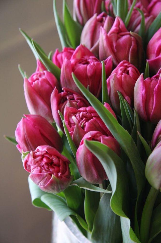 подобного типа тюльпаны фото для телефона наивные девочки