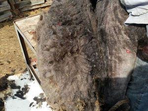 Овечья шерсть -флис, в Подарок | Ярмарка Мастеров - ручная работа, handmade