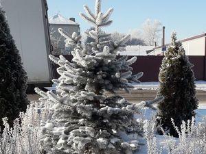 С первым днём зимы!. Ярмарка Мастеров - ручная работа, handmade.