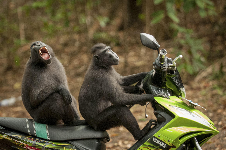 топ самых лучших смешных фотографий интересно смотрятся карликовые