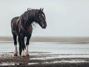 Фотограф Carina Maiwald и её лошади. Ярмарка Мастеров - ручная работа, handmade.