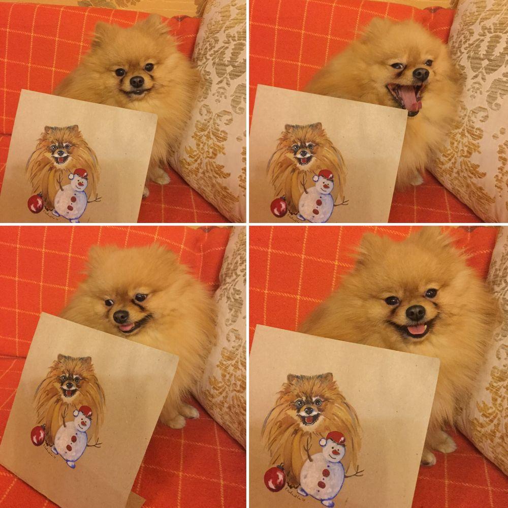 акварельная живопись, шпиц, собака, рисунок акварелью, рисунки, щенок, новый год, комикс, открытки, милота