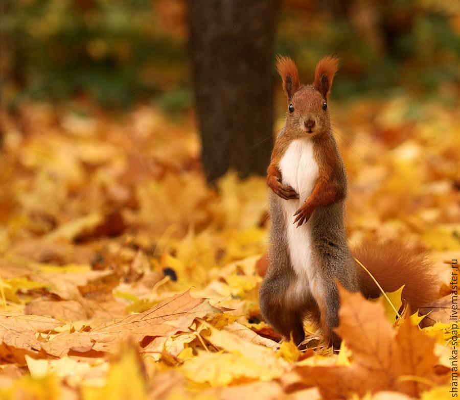 стоит прикольные картинки осени и животных прошептать тебе ушко