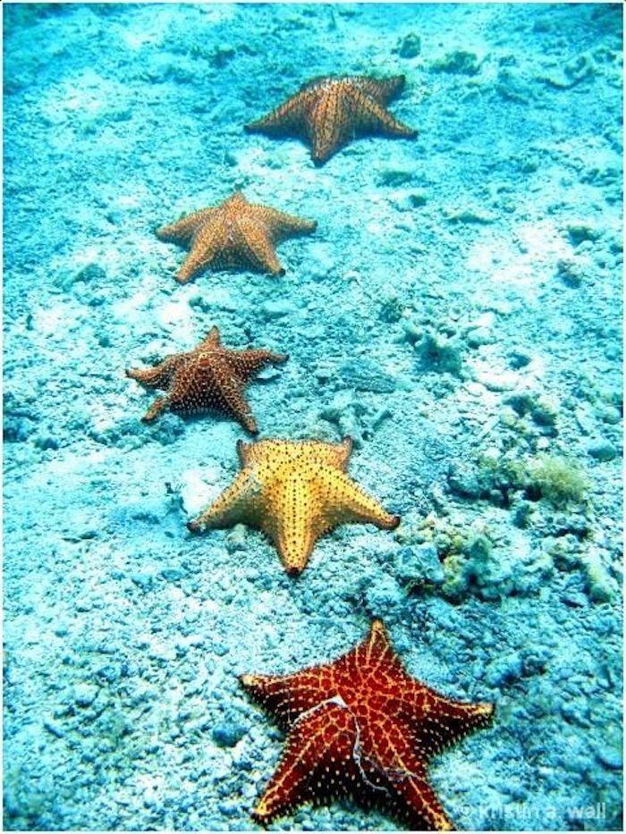 Вдохновляемся красотой Океана: сочетания цветов и форм – Ярмарка Мастеров<br />