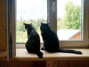 8 августа - Всемирный день кошек. Ярмарка Мастеров - ручная работа, handmade.
