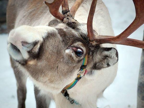 Так вот ты какой, свадебный олень! Идеи декора для зимнего торжества | Ярмарка Мастеров - ручная работа, handmade